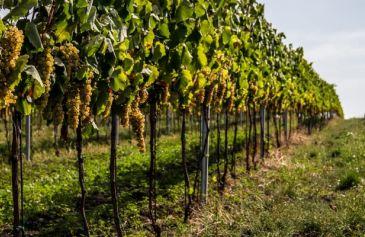 Vinohrady1